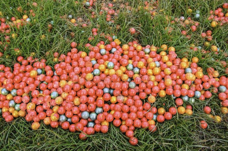 Paintball de la hierba imagen de archivo libre de regalías