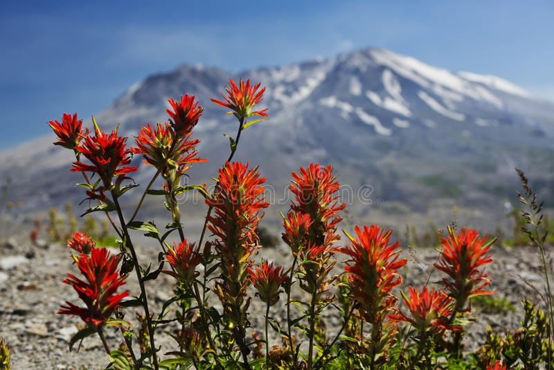 Paintbrush на Mt St Helens стоковые изображения rf