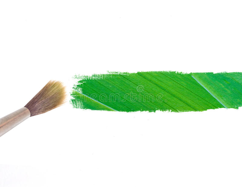 Download Paintbrush And Green Leave Stripe Stock Image - Image: 19258609