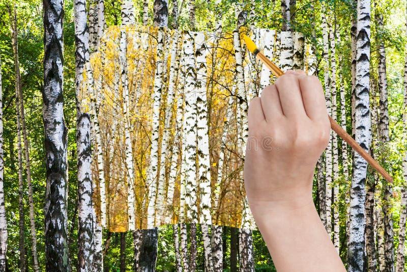 Paintbrush maluje żółtego jesieni brzozy gaj obraz stock