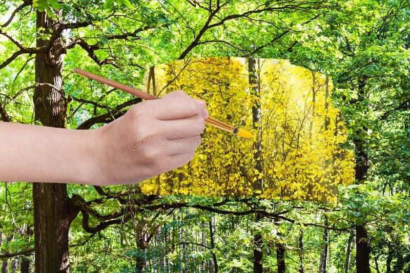 Paintbrush maluje żółtych liście w zielonym lesie obraz royalty free