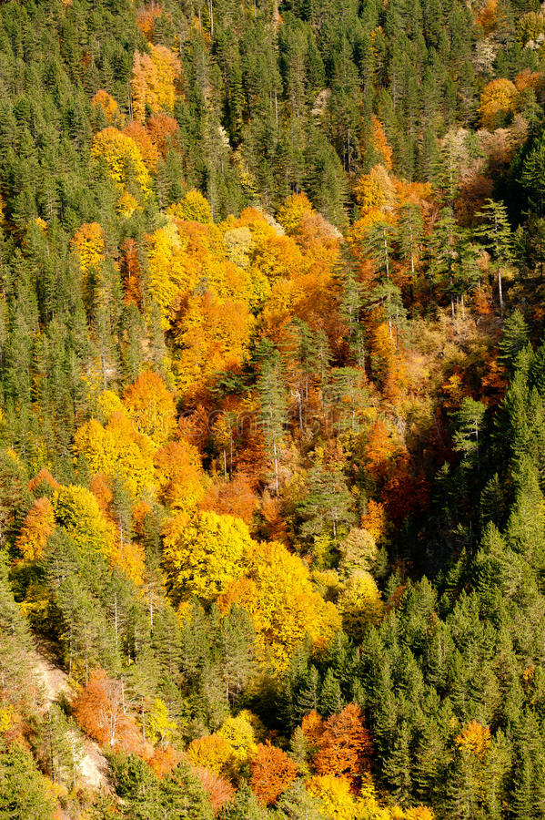 Painted by autumn. A mountain slope painted by autumn stock image