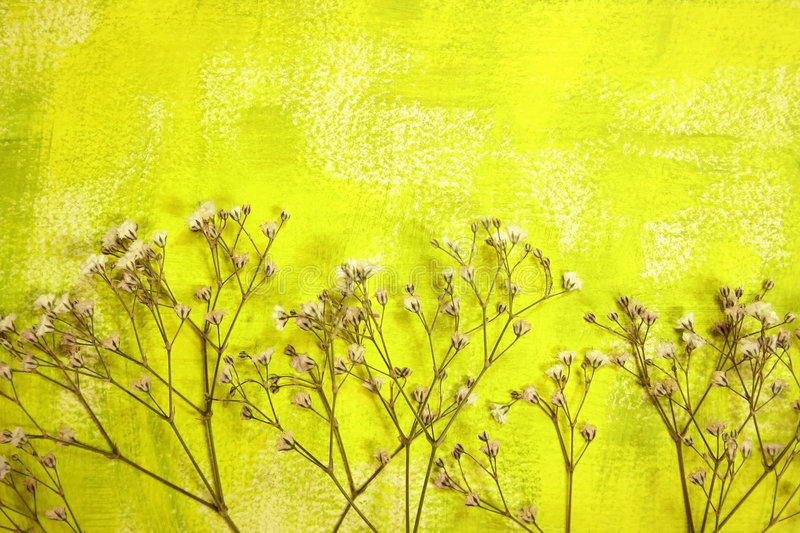 Painted Background And Dried Flowers Royalty Free Stock Photo