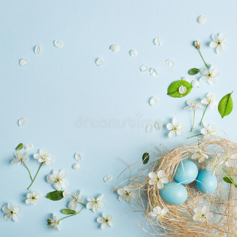 Painted blue Easter eggs on the background of cherry blossoms. Painted blue Easter eggs in the nest on the background of cherry blossoms stock images