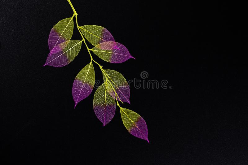 Branch with handmade leaves royalty free stock images