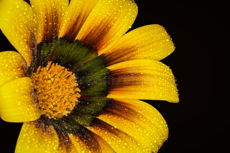 Download Painted Daisy Flower Stock Photos - Image: 28226573