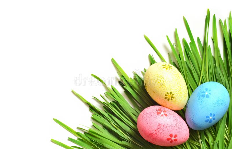 Painted Easter eggs on green grass isolated on white. stock photography