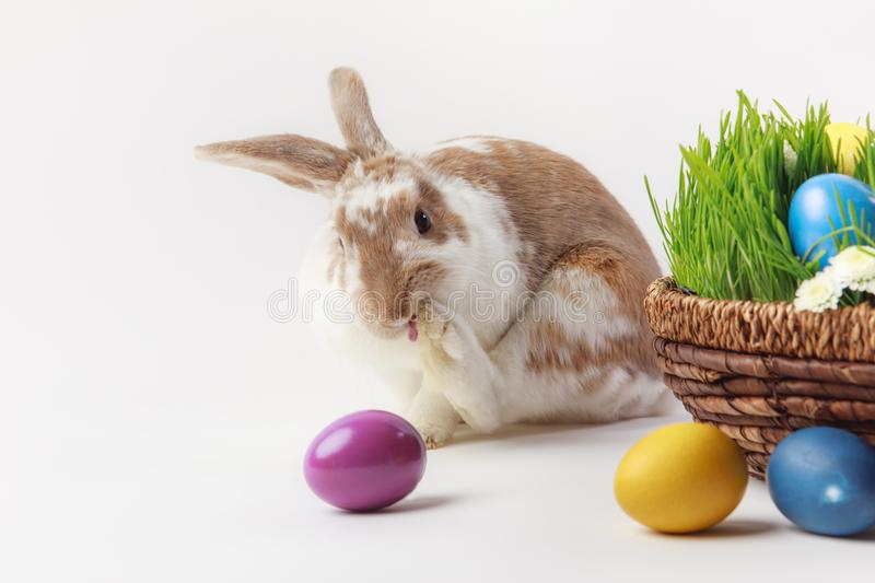 Painted eggs and bunny near basket with grass and flowers royalty free stock photo