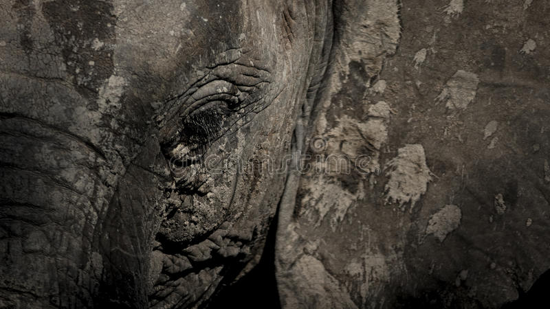 Painted Elephant. Artistic looking elephant with abstract mud paint splatters stock photos