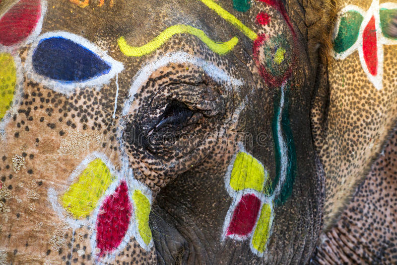 Painted elephants eye royalty free stock images