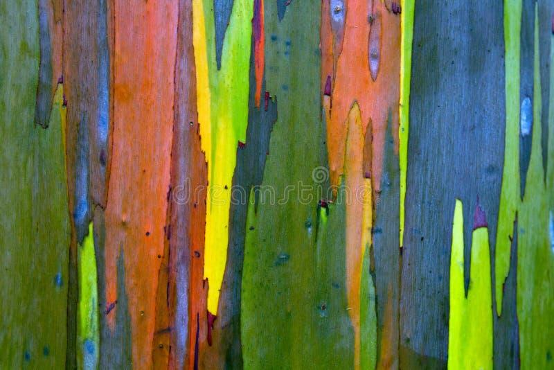 Rainbow Painted Eucalyptus (Gum) Tree Bark Background stock photos