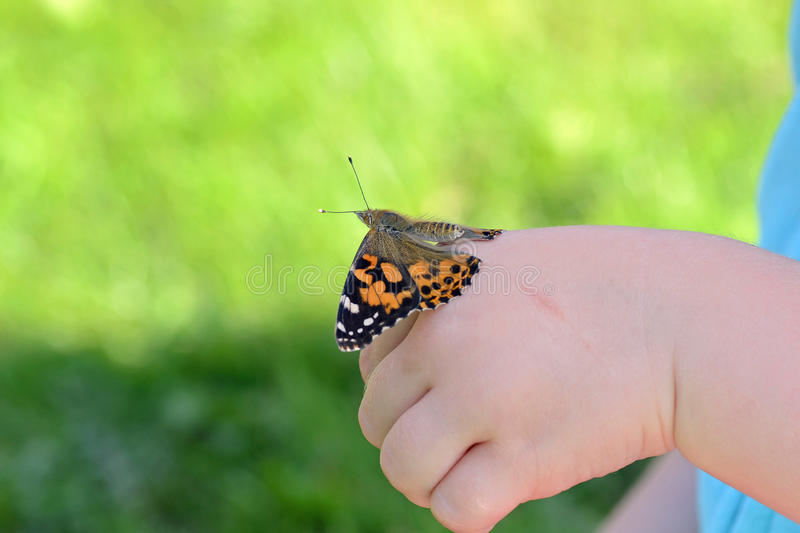 Painted lady butterfly on childs hand. Painted lady butterfly at rest on childs hand stock photography