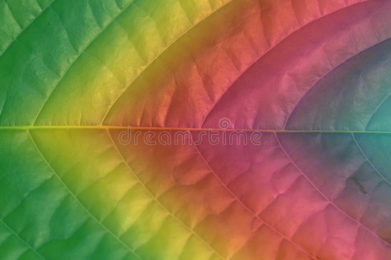 Close-up tinted with a color gradient leaf royalty free stock image