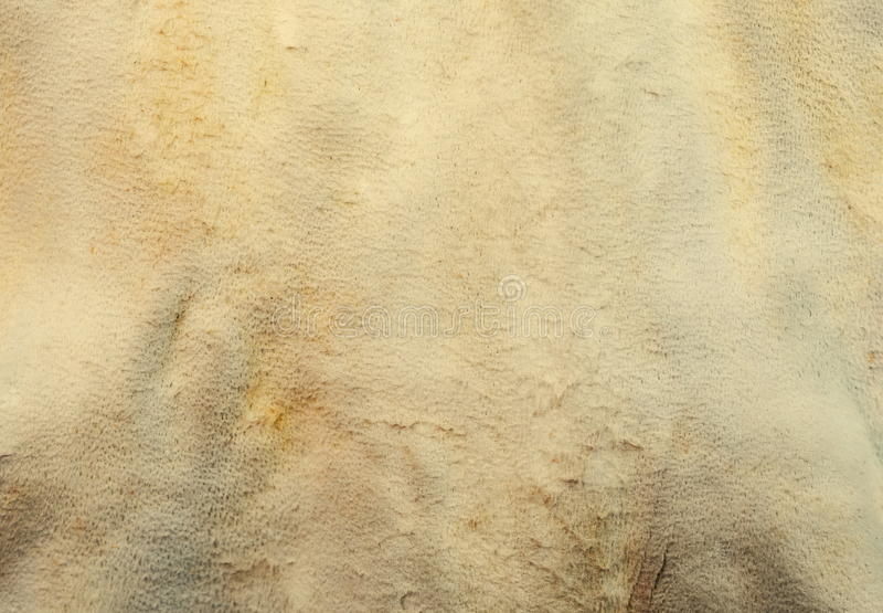 Painted raw rough skin. Lether background royalty free stock images