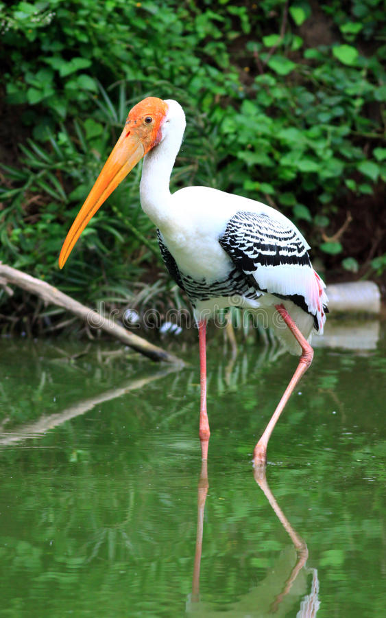 Free Painted Stork Stock Images - 16007694