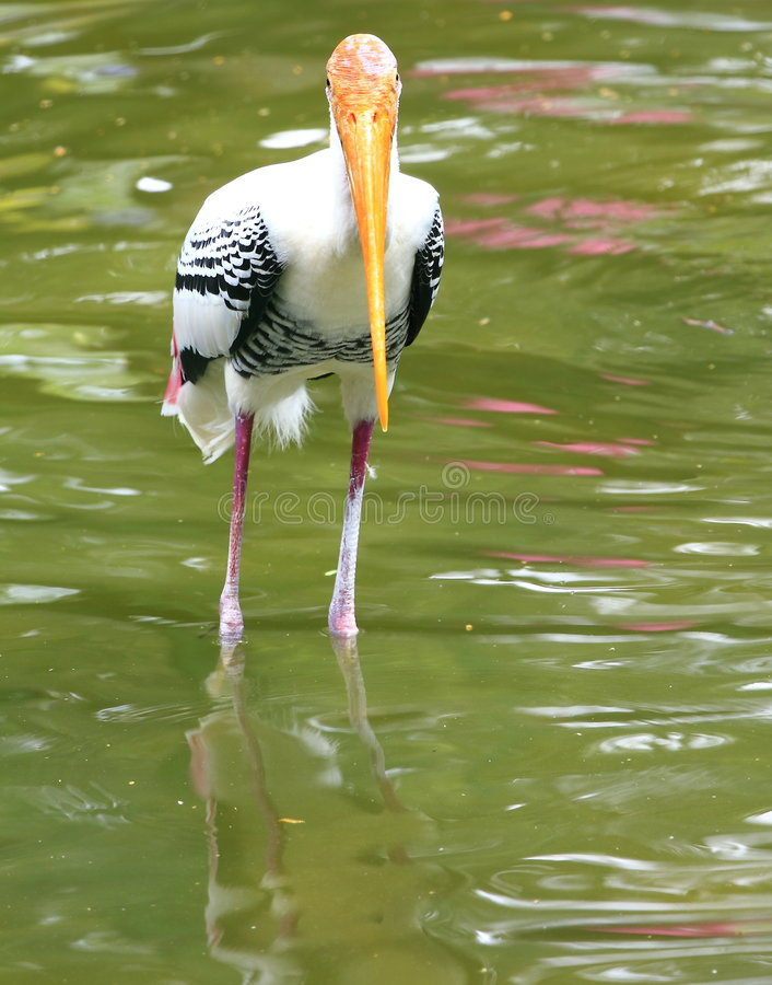 Free Painted Stork Stock Images - 6762464