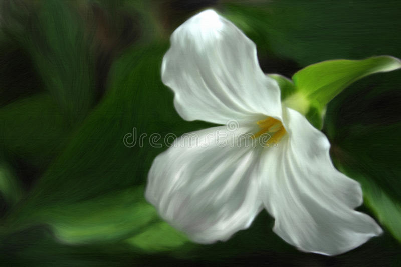 Painted Trillium. Painting of a trillium flower royalty free illustration
