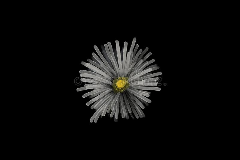 Painted white flower on a black background. Watercolor painted like white flower on a black background stock photos