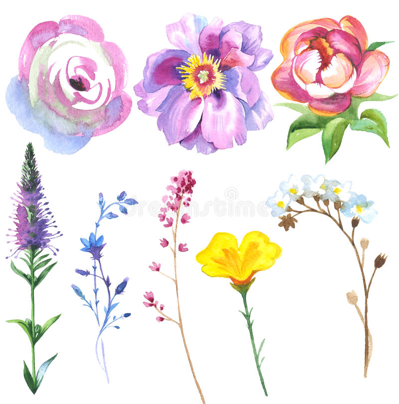 Free Painted Wildflower Flowers Set In A Watercolor Style. Stock Photos - 77140883