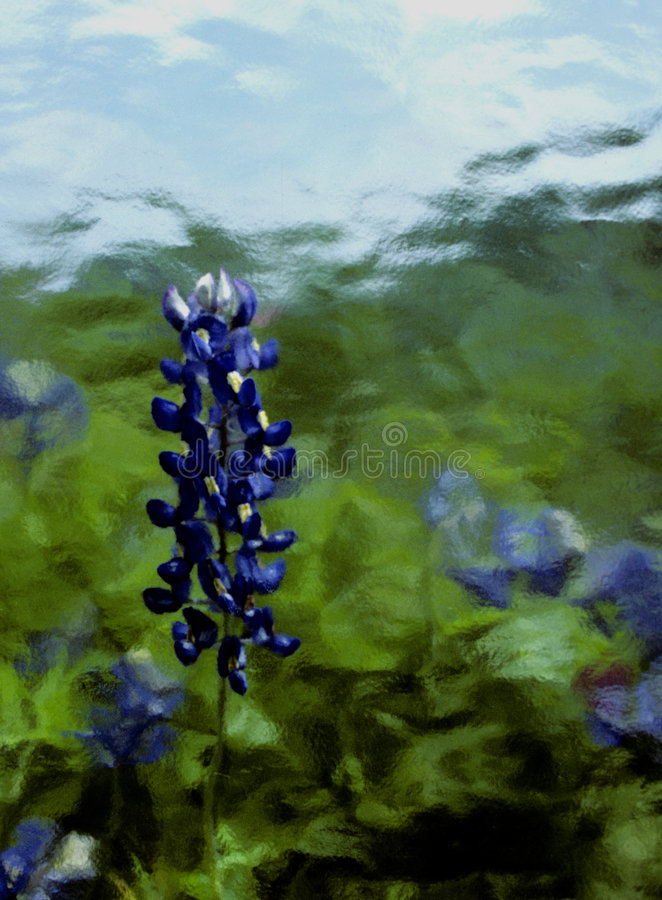 painterly bluebonnet arkivbilder