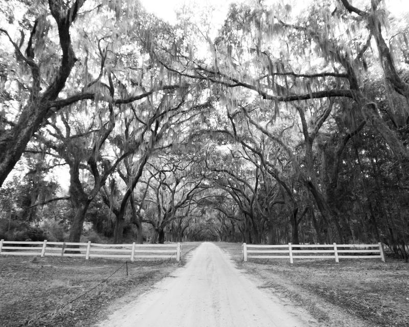 Painterly effect of Wormsloe Plantation in Savannah stock photography
