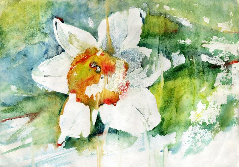 Painting flowers narcissus stock photography