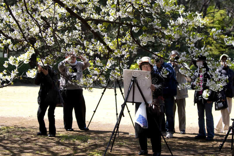 Painting and photographing the cherry blossoms royalty free stock images