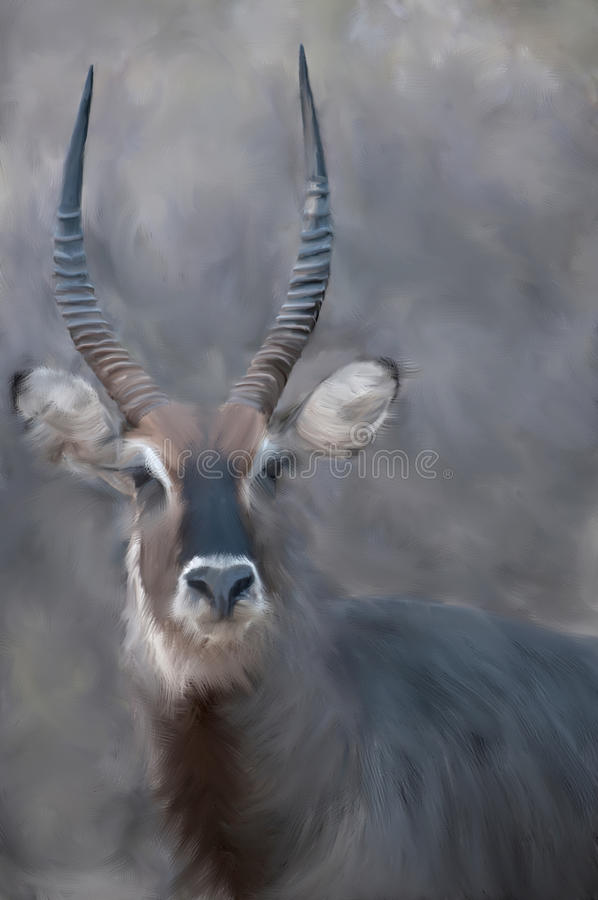Painting of a Waterbuck. royalty free stock image