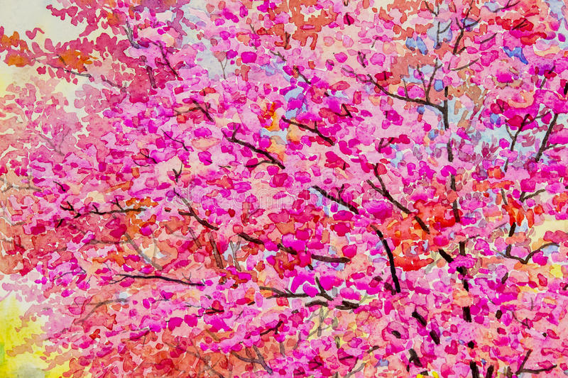 Painting watercolor pink red color of Wild himalayan cherry,and beauty spring. Painting watercolor landscape original pink red color of Wild himalayan cherry vector illustration