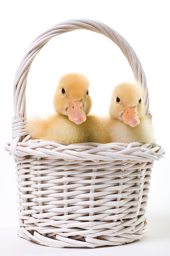 Download Pair Of Baby Ducks In An Easter Basket Stock Image - Image: 4348829