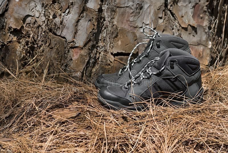 A pair of black hiking boots. In the forest at sunset stock photo