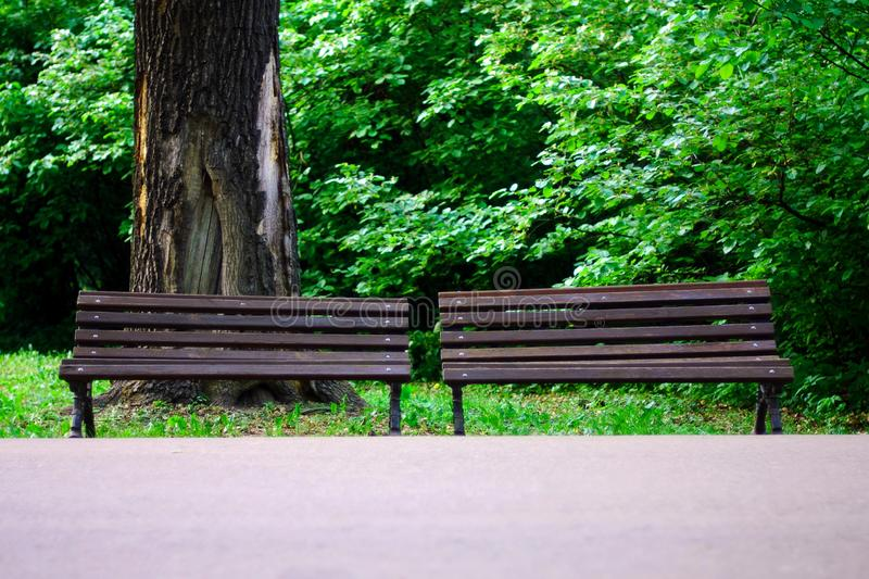 Pair of brown park benches against large tree trunk with hollow. Two old brown wooden park benches against large tree trunk with hollow and damaged bark on green royalty free stock photography