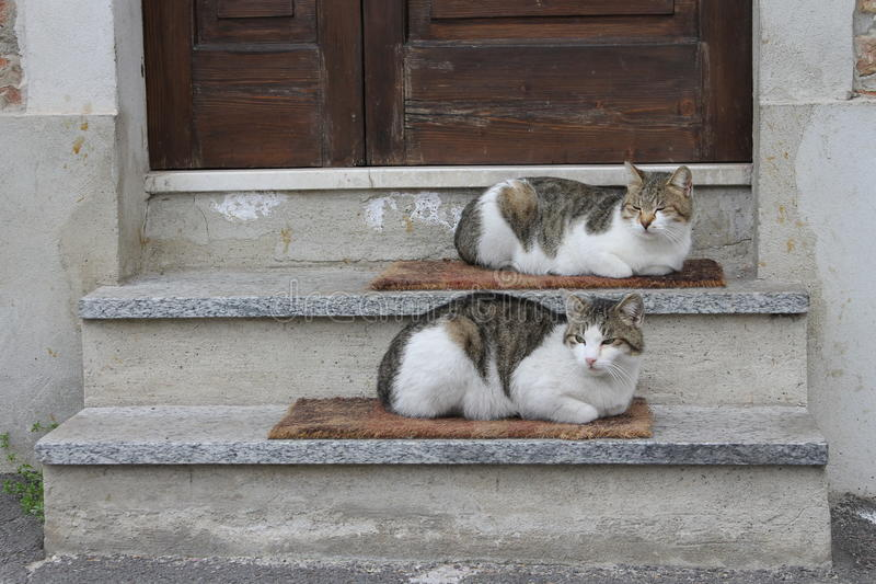 Pair of cats royalty free stock image