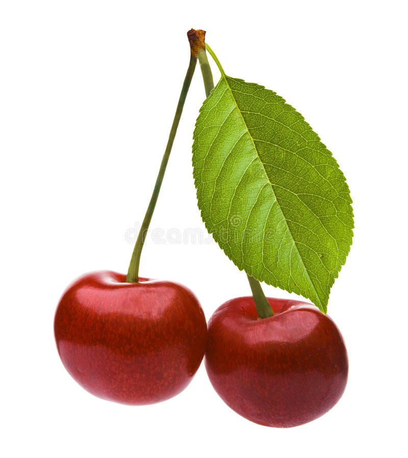 Download Pair of cherries stock image. Image of ripe, stem, leaf - 3534423