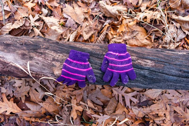 A Pair of a Child`s Winter Gloves on a Log in the Forest during Winter stock photography
