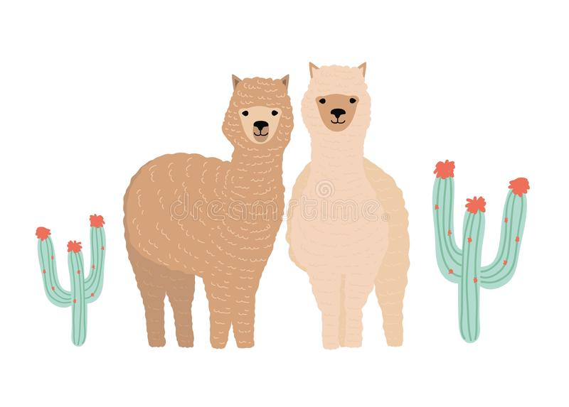 Pair of cute llamas isolated on white background. Couple of beautiful funny wild South American animals standing royalty free illustration