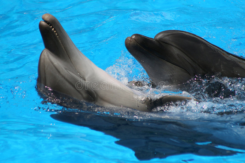 Download Pair dances of dolphins. stock photo. Image of summer - 4054718