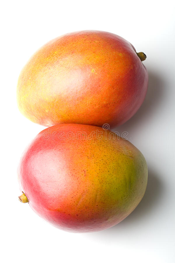 Pair of fresh juicy ripe mango tropical fruits royalty free stock photo