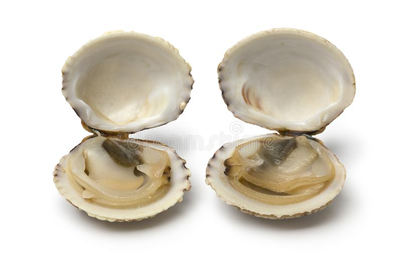 Pair of fresh raw open warty venus clams stock images