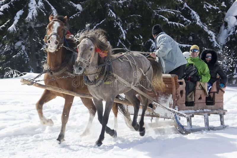 A pair of horses harnessed to a wagon, fun people in a mountain village in the snow. royalty free stock photo