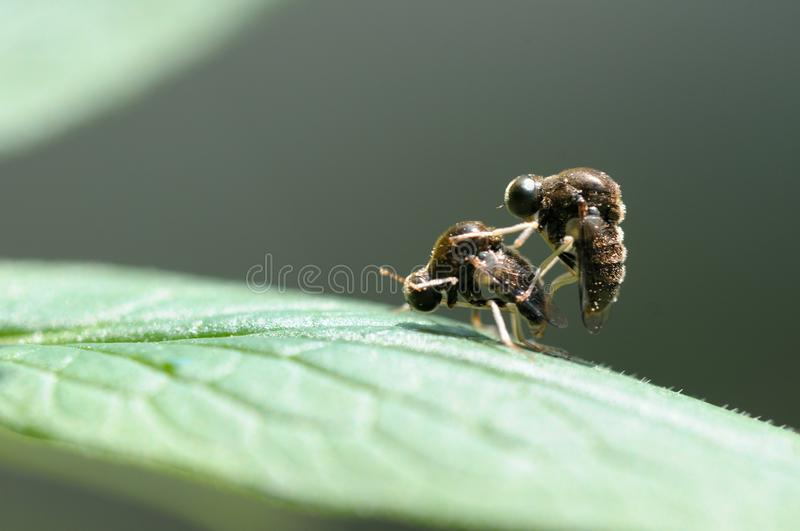 A pair of insects royalty free stock photography