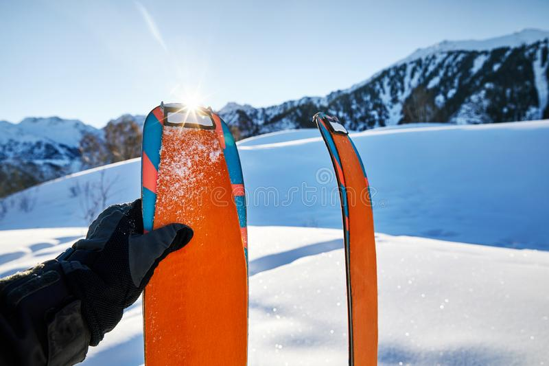 Pair of orange skis for ski touring. Pair of skis in snow with orange camus at sunny morning at the mountains royalty free stock photos
