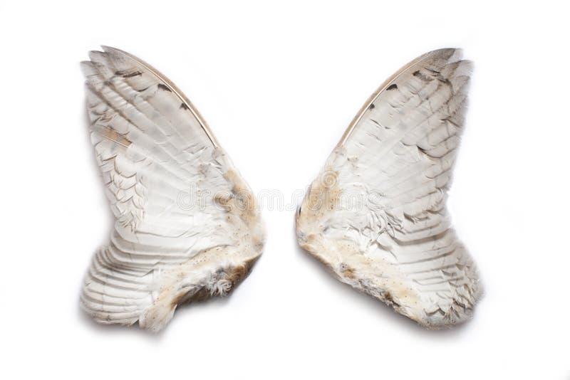 Pair of owl wings royalty free stock photos