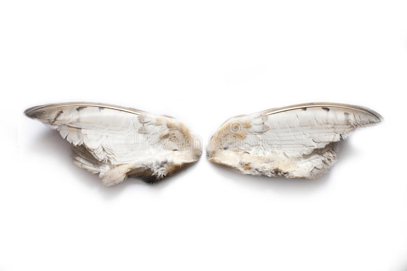 Pair of owl wings stock images