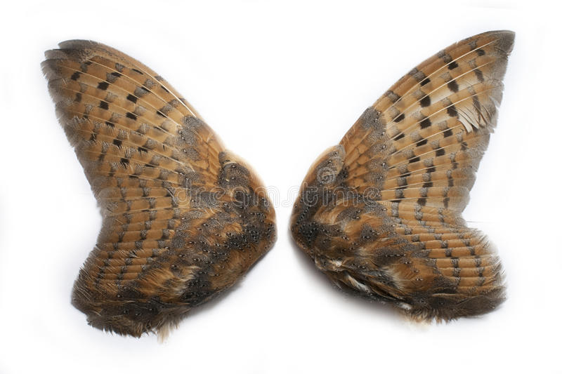 Pair of owl wings stock photography