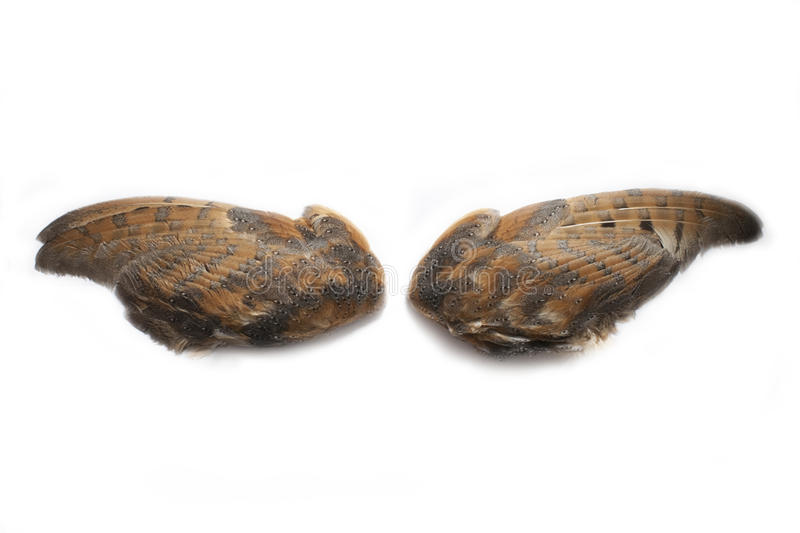 Pair of owl wings royalty free stock photo