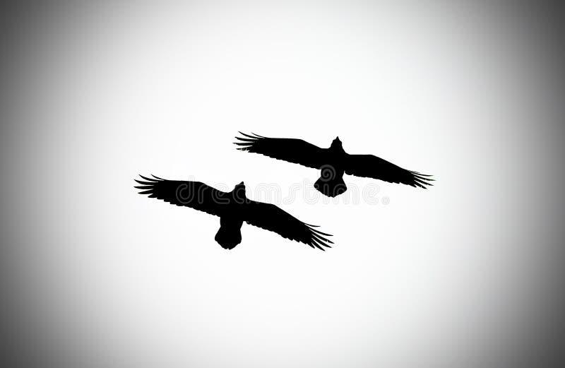 Pair of ravens vector illustration
