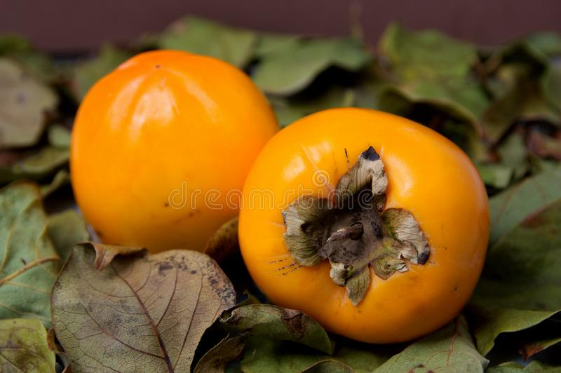 A pair of ripe persimmons on a pile of dried persimmon leaves. Close-up of a pair of ripe persimmons that are on dried persimmon leaves, halloween, thanksgiving royalty free stock photo
