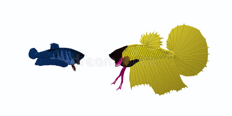 Pair of siamese fighting fish stock images