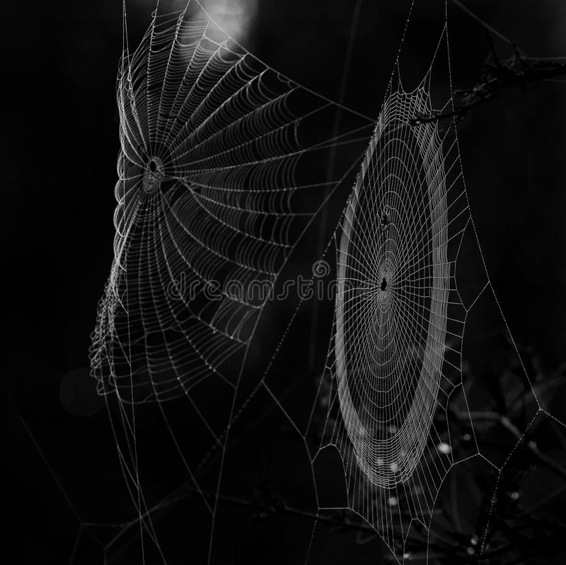 A pair of spider webs. Photographed in the Misiones province of Argentina stock image